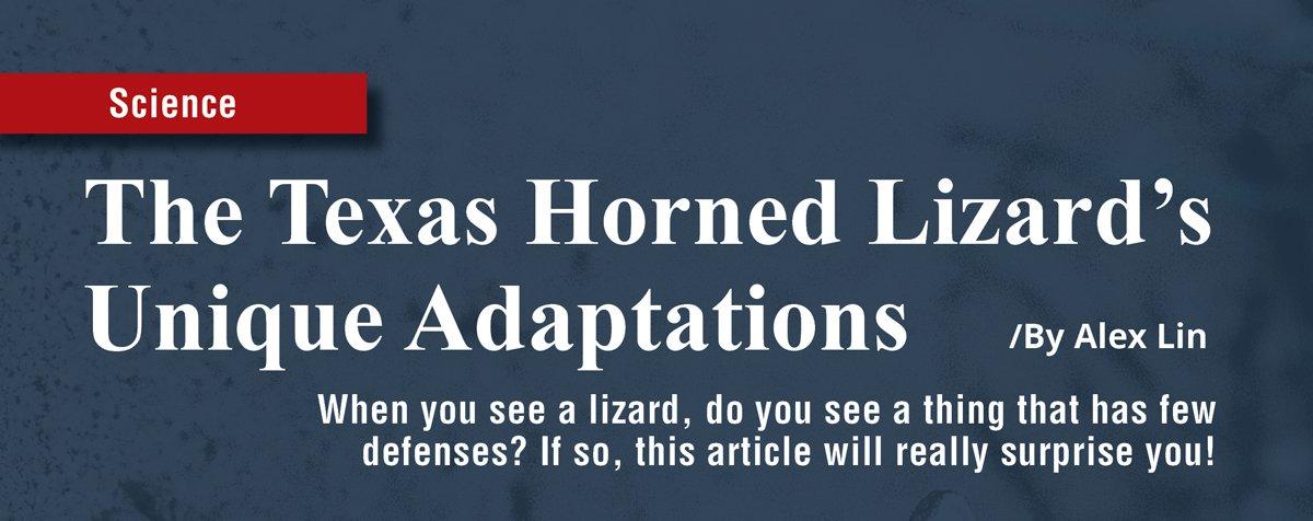 texas_horned_lizard